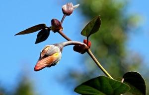 rośliny do ogrodu - jak wybrać?
